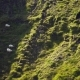 Sheep Walking in Iceland - VideoHive Item for Sale