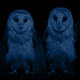 Owls At Night - VideoHive Item for Sale