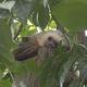 Sloth Sleeping in a Tree - PhotoDune Item for Sale