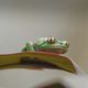 Tree Frog in the Rain Forest - PhotoDune Item for Sale