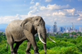 Elephant with the city of on the background