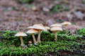 Wild mushrooms growing in a forest