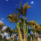 Tropical Forest and TimeLapse Clouds - VideoHive Item for Sale