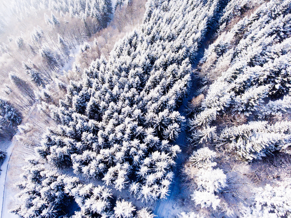 Aerial view of coniferous forest in winter. - Stock Photo - Images