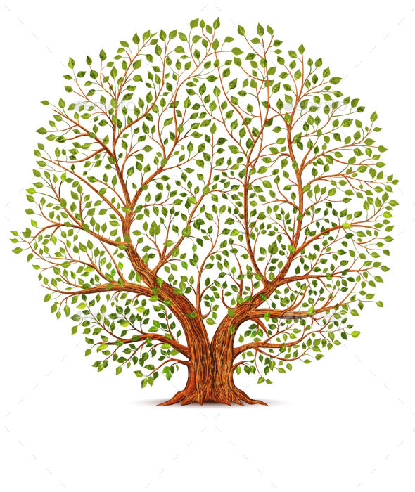 Old Tree - Flowers & Plants Nature