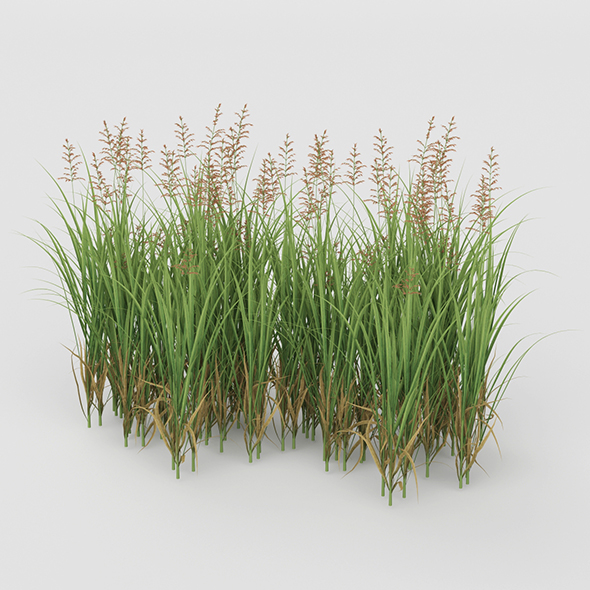 3DOcean Grass Bush 20755217