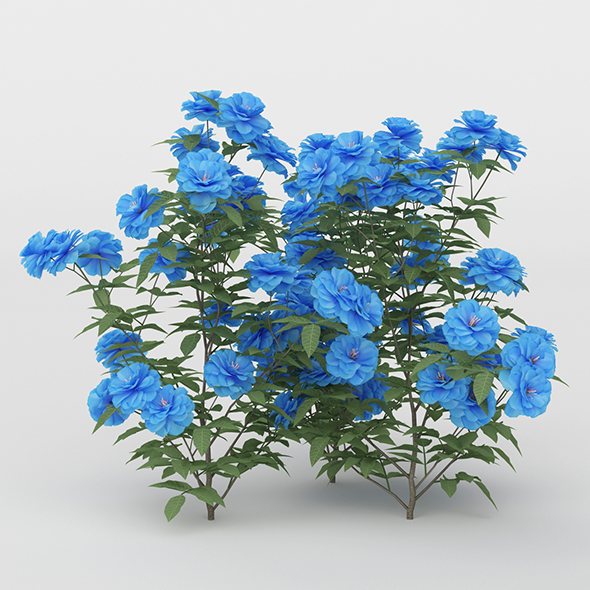 3DOcean Blue Daisies Flower Bush 20755269