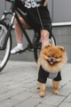 Girl with dog on bike - PhotoDune Item for Sale