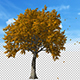Falling Leaves Side View - VideoHive Item for Sale