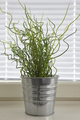 Green plant on a metallic pot. Interior decoration background. Vertical