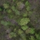 Aerial Top Down Flight Over Budding Trees in Northern Canada Springtime - VideoHive Item for Sale