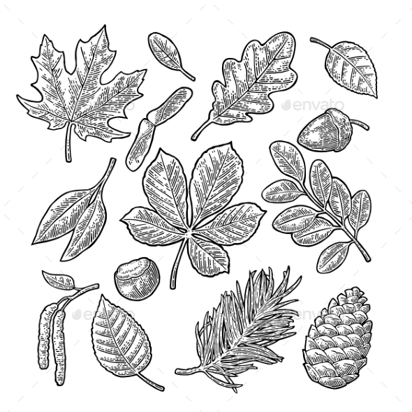 Set of Leaf, Acorn, Chestnut and Seeds - Flowers & Plants Nature