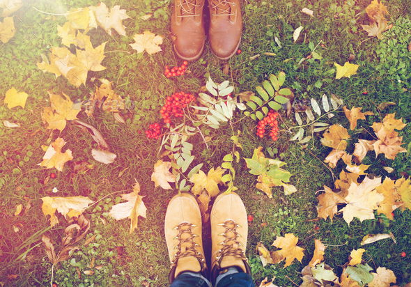 feet in boots with rowanberries and autumn leaves - Stock Photo - Images
