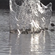 Splashing Stone