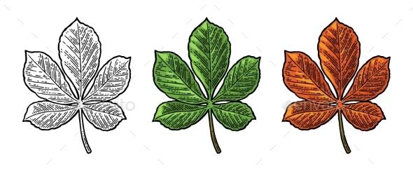 GraphicRiver Chestnut Leaf Spring Green and Autumn Orange 20762896