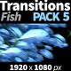 Transitions Fish
