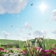 Green Field With Beautiful Flowers - VideoHive Item for Sale