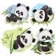 Playful Panda Bear Baby with Bamboo Cartoon Vector