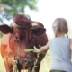Child Is Feeding a Cow - VideoHive Item for Sale