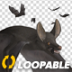 Bats - Swarm Flying Around - Loop - VideoHive Item for Sale
