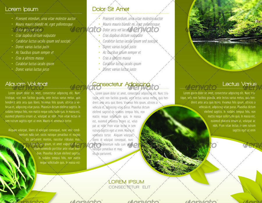 green trifold brochure indesign template by alvarocker graphicriver