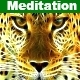 The Meditation Music
