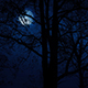 Moving Slowly Past Trees With Moon Above - VideoHive Item for Sale