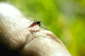 Close up of mosquito sucking blood - PhotoDune Item for Sale