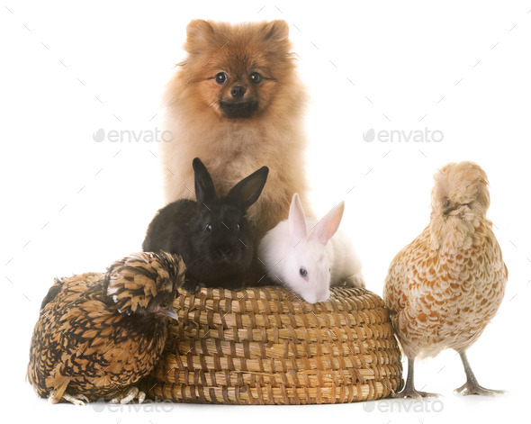 group of animals - Stock Photo - Images