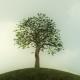 Growing Tree Background Animation