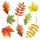 Autumn Leaves Set - GraphicRiver Item for Sale