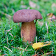 Wild mushroom growing in a forest - PhotoDune Item for Sale