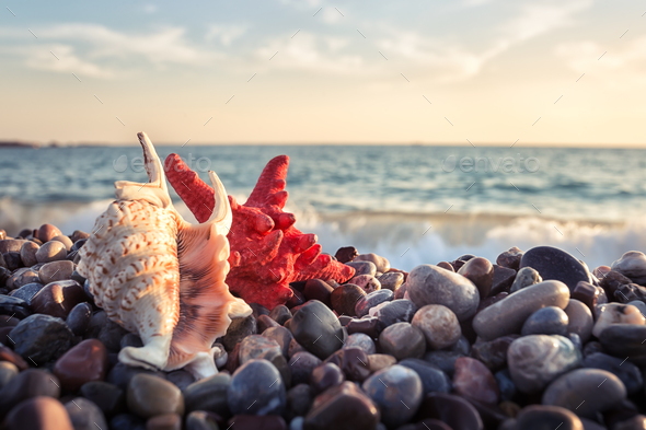 Starfish and seashell on pebbles of the sea shore - Stock Photo - Images
