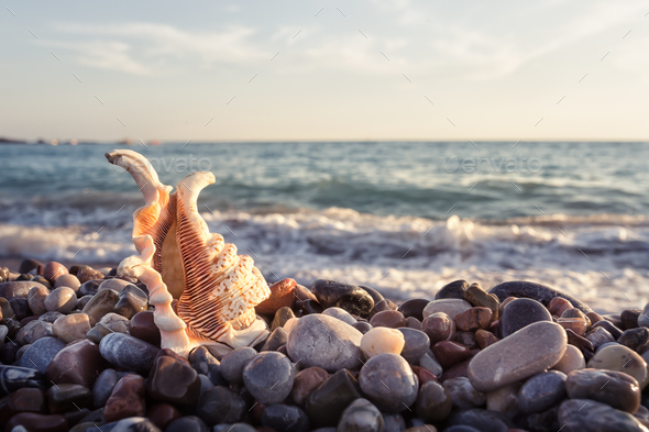 Ornate shell on the stony sea shore - Stock Photo - Images