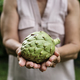 Hands holding artichoke organic produce from farm - PhotoDune Item for Sale