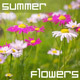 Summer Flowers - VideoHive Item for Sale