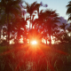 Tropical Jungle at Sunset - VideoHive Item for Sale
