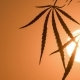 Shot of Marijuana at the Sunset Background - VideoHive Item for Sale