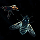 5K Bees - Dark Version - GraphicRiver Item for Sale