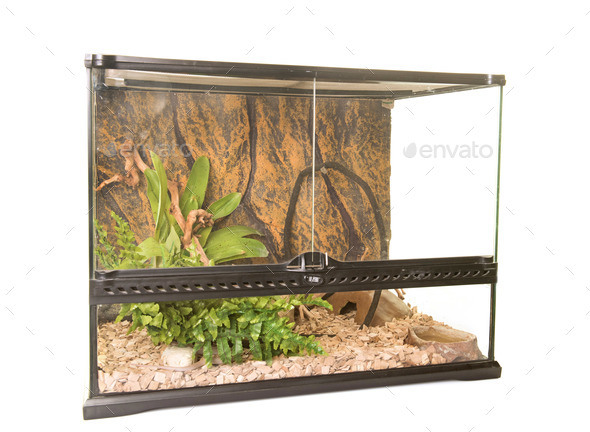 terrarium in studio - Stock Photo - Images