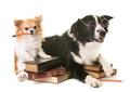 dogs in school