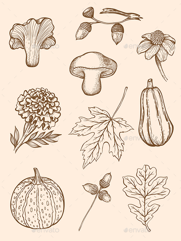 Autumn Design Kit - Flowers & Plants Nature