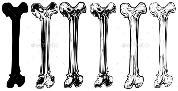 Graphic Black and White Human Bone Vector Set - Miscellaneous Vectors