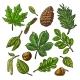Vintage Leaves and Seeds