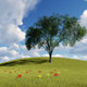 Green Field And Tree - VideoHive Item for Sale