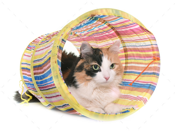 tricolor cat and tunnel - Stock Photo - Images
