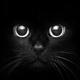 blackcats2005