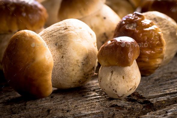 Raw porcini mushrooms - Stock Photo - Images