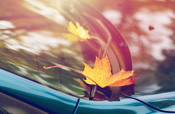 close up of car wiper with autumn leaves - Stock Photo - Images