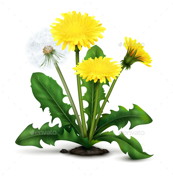 Realistic Dandelion Illustration - Flowers & Plants Nature